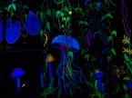 jellyfish in the jungle 2017